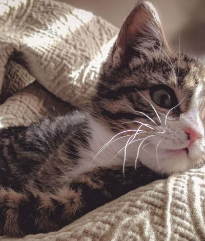 Kattkompaniet-rabattkoder